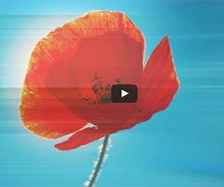 carte-de-veoux-video-mini